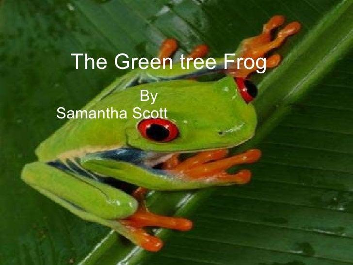 The Green tree Frog By    Samantha Scott