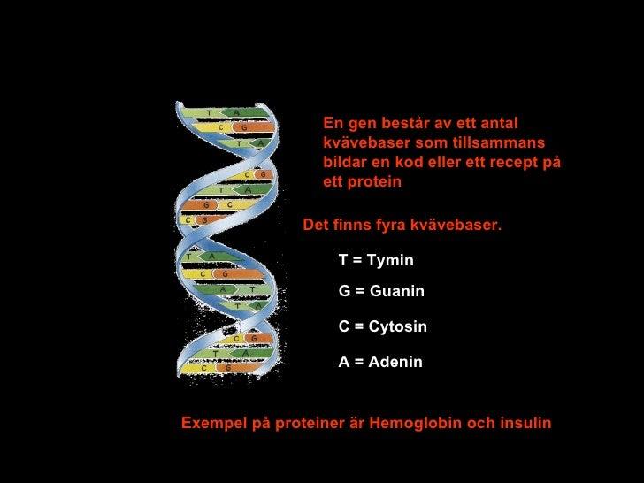proteiner består av