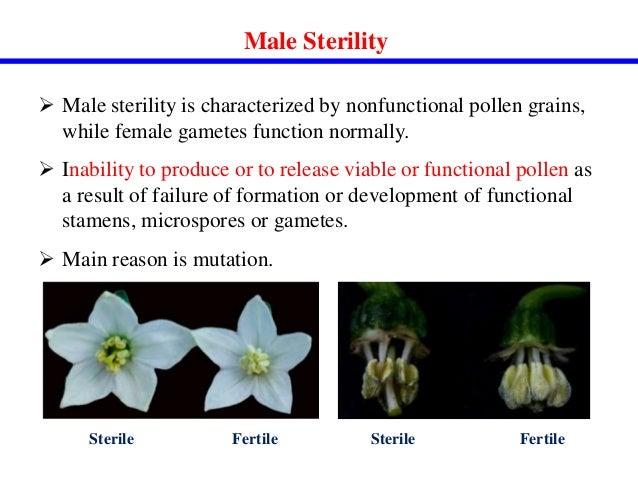 monocot pollen