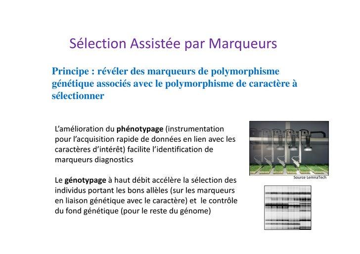 Sélection Assistée par MarqueursPrincipe : révéler des marqueurs de polymorphismegénétique associés avec le polymorphisme ...