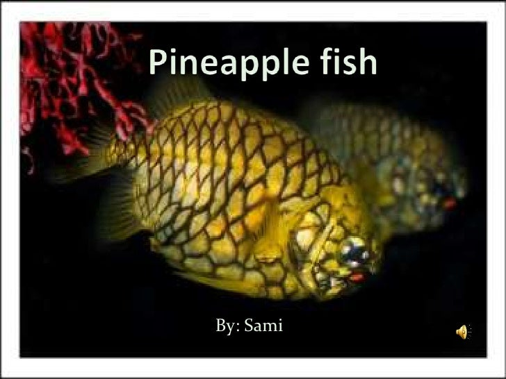 Pineapple fish<br />By: Sami<br />