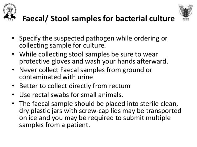 Sample collection for bacterial isolation, characterization and antib…