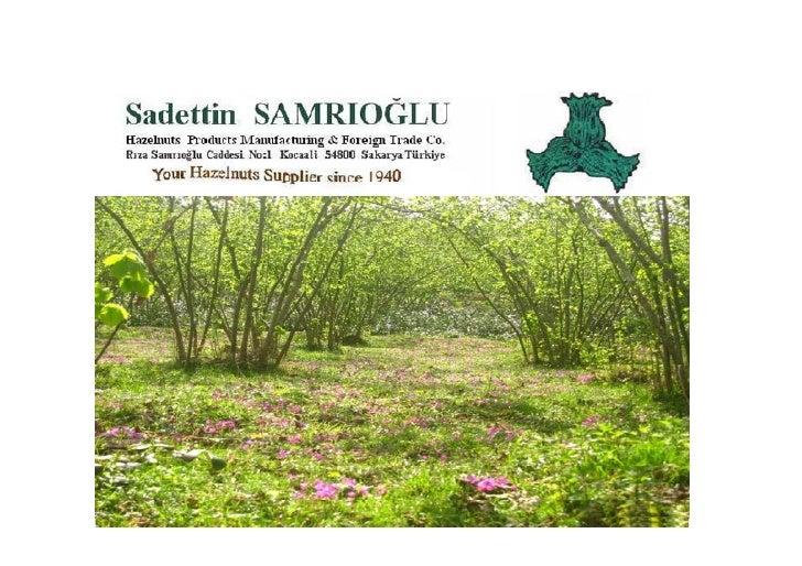 Welcome to SAMRIOĞLU HAZELNUTS, DRIED FRUITS & CHESTNUTS EXPORT TO THE WHOLE WORLD Company was founded by Sadettin Samrıoğ...