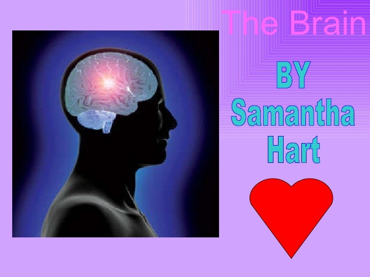 The Brain BY Samantha Hart
