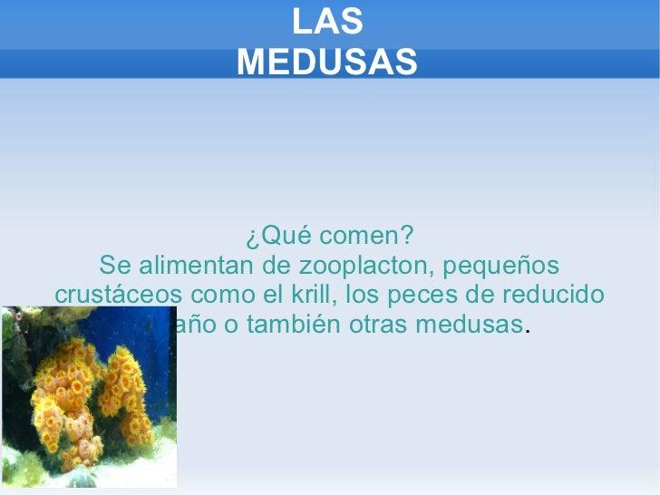 Samuel b medusas - Como se alimentan las medusas ...