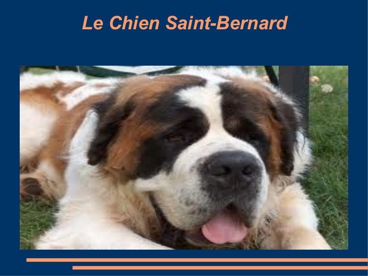 Le Chien Saint-Bernard