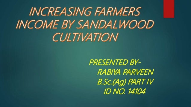 Sandalwood cultivation