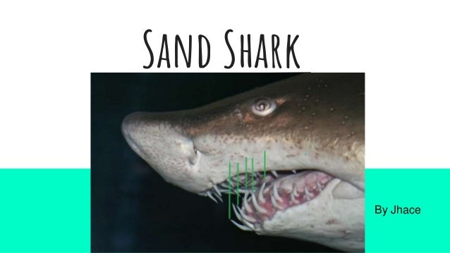 Sand Shark By Jhace