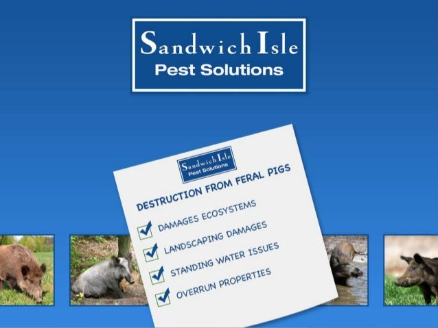 Sandwich Isle Pest Solutions Provides Feral Pig Tips