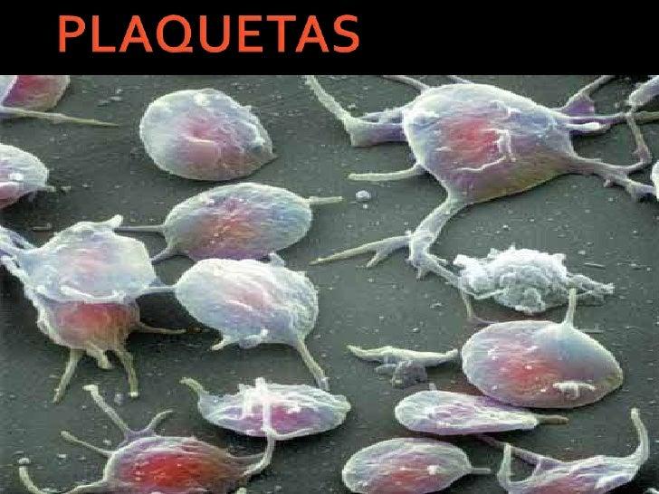 Resultado de imagen de plaquetas en sangre