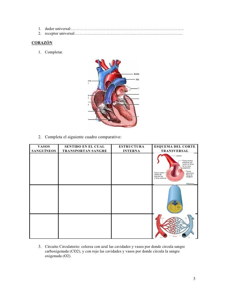 Circuito Circulatorio : Sangre y sistema cardiovascular