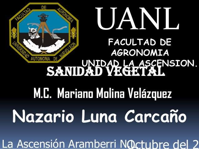 UANLFACULTAD DEAGRONOMIAUNIDAD LA ASCENSION.M.C. Mariano Molina VelázquezNazario Luna CarcañoSanidad VegetalLa Ascensión A...