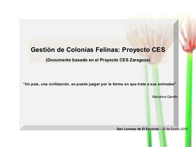 """Gestión de Colonias Felinas: Proyecto CES (Documento basado en el Proyecto CES Zaragoza)  """"Un país, una civilización, se p..."""