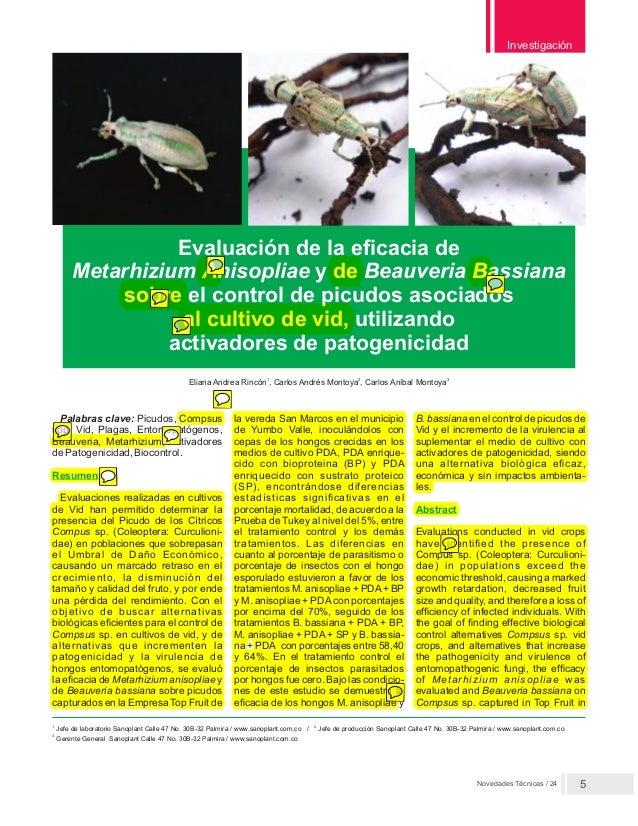 Novedades Técnicas / 24 Investigación 5 Evaluación de la eficacia de Metarhizium Anisopliae y de Beauveria Bassiana sobre ...