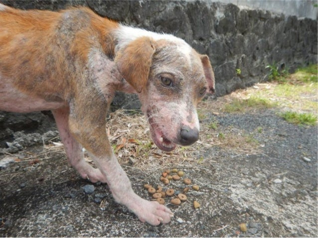 L'errance animale : une réalité qui fait mal.