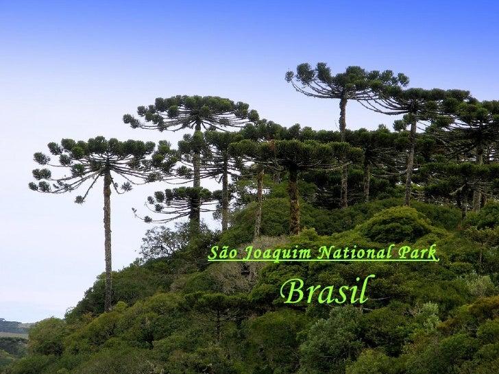 São Joaquim National Park  Brasil