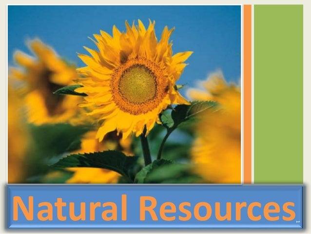 Natural Resources 1