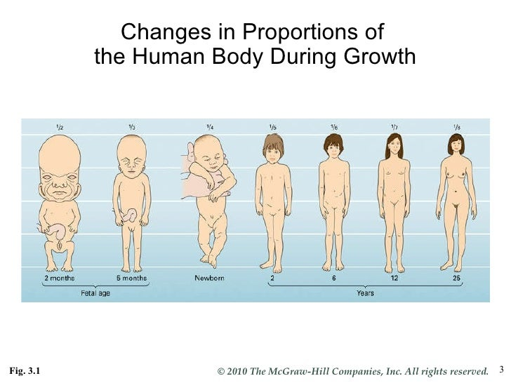 Human Penis Growth 36