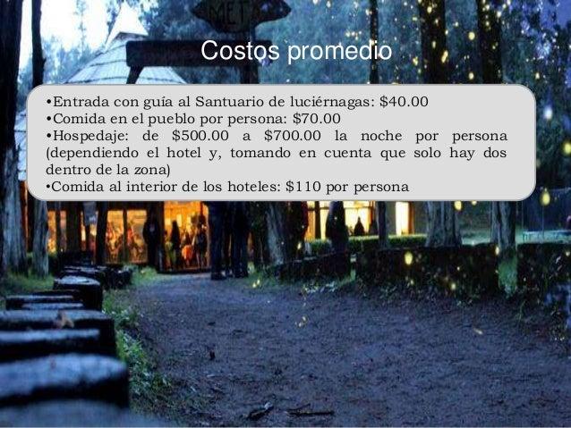Santuario de luci rnagas Espectaculo de luciernagas en tlaxcala