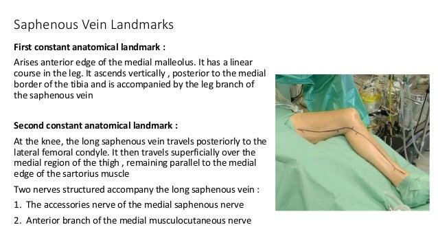saphenous vein harvesting, Human Body