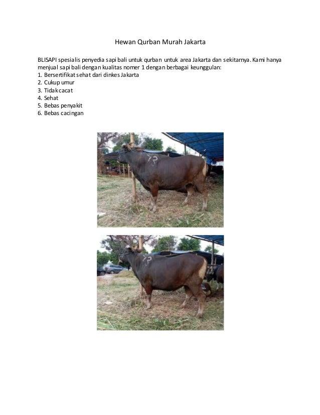 Hewan Qurban Murah Jakarta BLISAPI spesialis penyedia sapi bali untuk qurban untuk area Jakarta dan sekitarnya. Kami hanya...