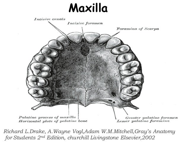Os temporale extra lateralis BONES t Anatomy e Medicine