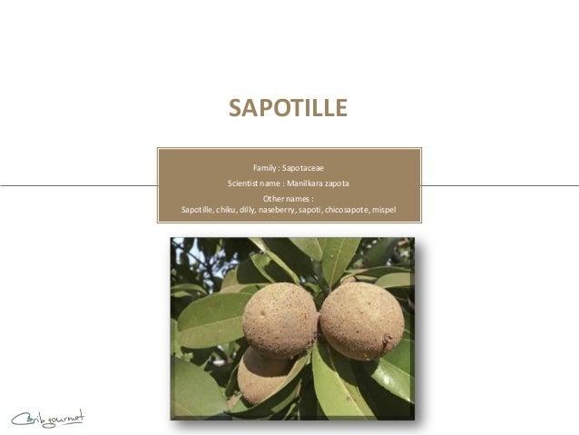 SAPOTILLE                     Family : Sapotaceae             Scientist name : Manilkara zapota                          O...
