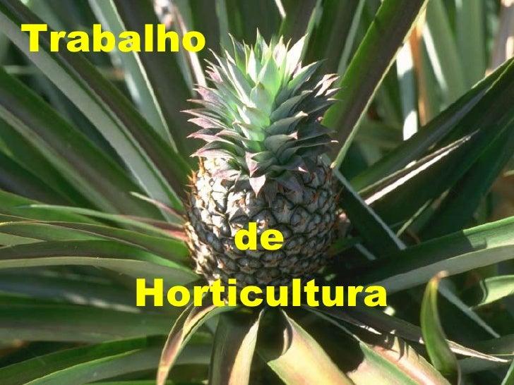Trabalho de Horticultura