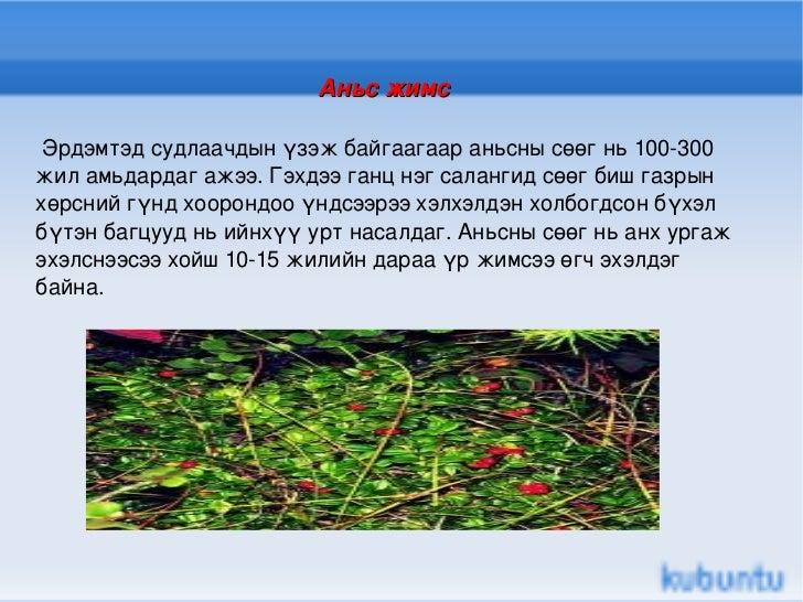 Аньс жимс   Эрдэмтэд судлаачдын үзэж байгаагаар аньсны сөөг нь 100-300 жил амьдардаг ажээ. Гэхдээ ганц нэг салангид сөөг б...