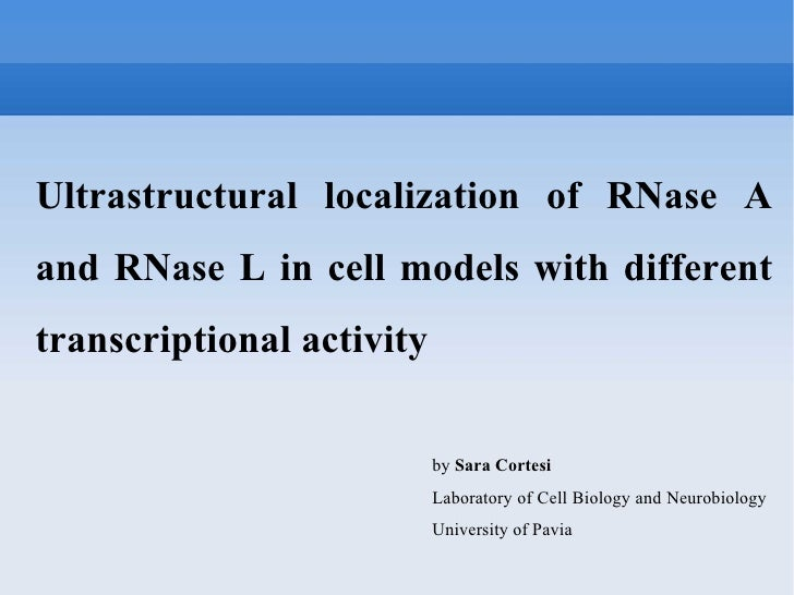 Ultrastructural localization of RNase A and RNase L in cell models with different transcriptional activity  by  Sara Corte...