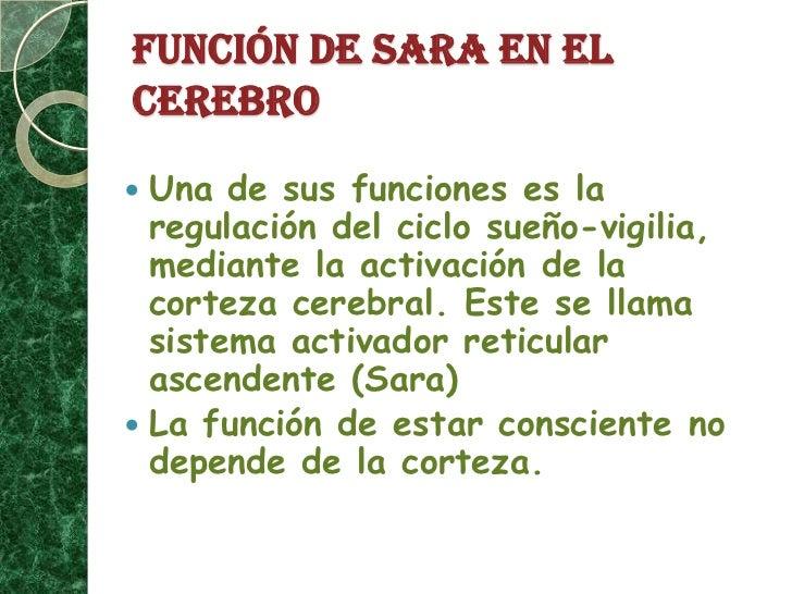 FUNCIÓN DE SARA EN EL CEREBRO<br />Una de sus funciones es la regulación del ciclo sueño-vigilia, mediante la activación d...
