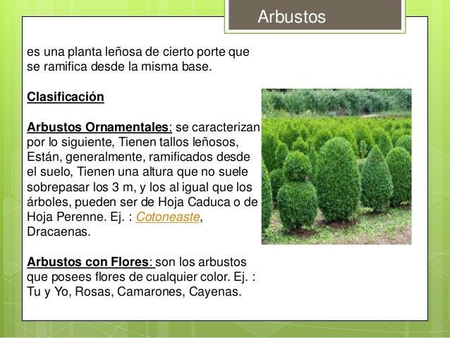 Clasificacion de la vegetacion for Tipos de arbustos ornamentales