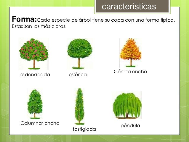 Clasificacion de la vegetacion for Arboles con sus nombres y caracteristicas