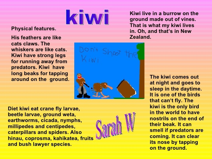 Physical features. His feathers are like cats claws. The whiskers are like cats. Kiwi have strong legs for running away fr...