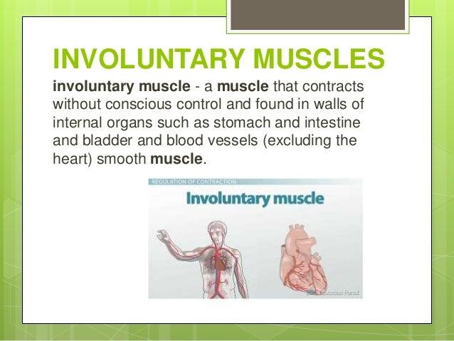 involuntary-muscles-2-638?cb=1447487637, Human body