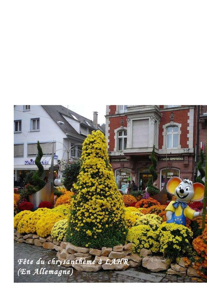 Fête du chrysanthème à LAHR (En Allemagne)