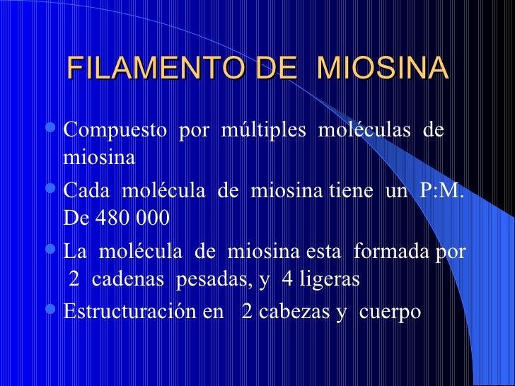 FILAMENTO DE  MIOSINA <ul><li>Compuesto  por  múltiples  moléculas  de  miosina </li></ul><ul><li>Cada  molécula  de  mios...