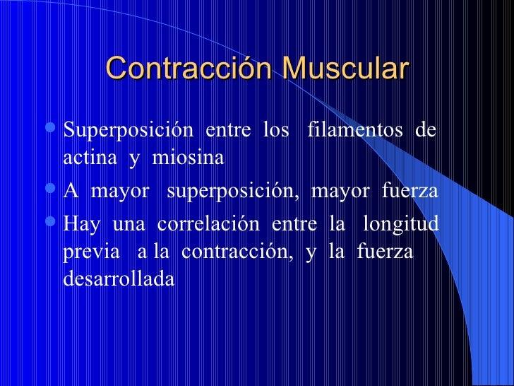 Contracción Muscular <ul><li>Superposición  entre  los  filamentos  de  actina  y  miosina </li></ul><ul><li>A  mayor  sup...