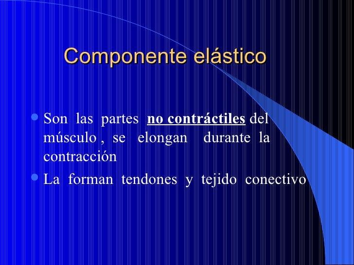 Componente elástico <ul><li>Son  las  partes  no contráctiles  del músculo ,  se  elongan  durante  la  contracción </li><...