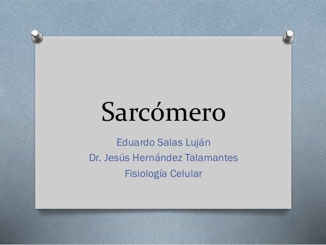 Sarcómero Eduardo Salas Luján Dr. Jesús Hernández Talamantes Fisiología Celular