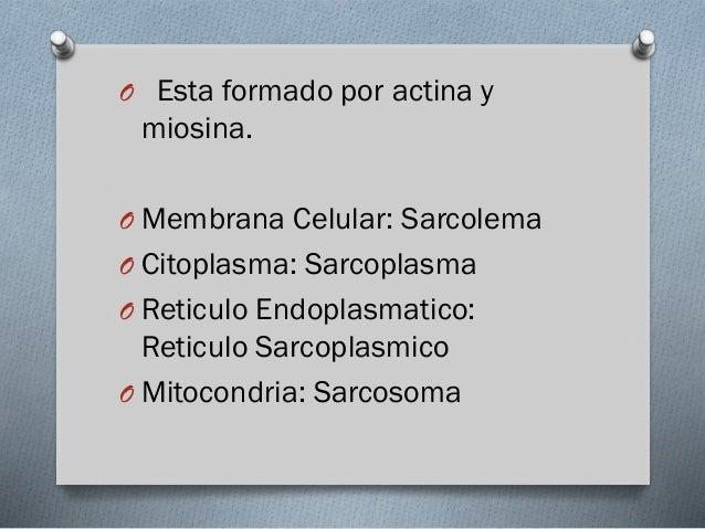 O La contracción del músculo  consiste en el deslizamiento de los miofilamentos finos de actina sobre los miofilamentos de...