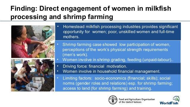 case study shrimp farming in ecuador 'the threat for the domestic shrimp farmer in the  china, thailand, indonesia  and ecuador.