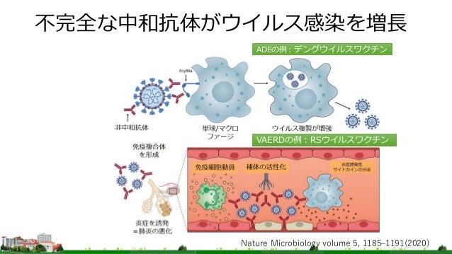 不完全な中和抗体がウイルス感染を増長 Nature Microbiology volume 5, 1185–1191(2020) ADEの例:デングウイルスワクチン VAERDの例:RSウイルスワクチン