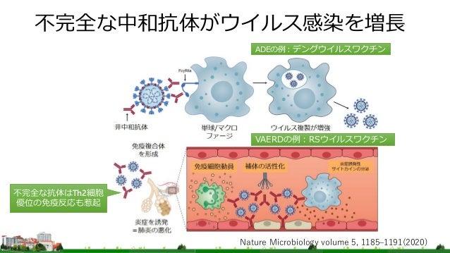 不完全な中和抗体がウイルス感染を増長 ADEの例:デングウイルスワクチン VAERDの例:RSウイルスワクチン Nature Microbiology volume 5, 1185–1191(2020) 不完全な抗体はTh2細胞 優位の免疫反応...