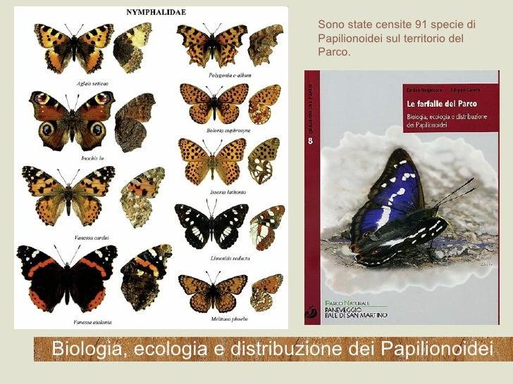 Biologia, ecologia e distribuzione dei Papilionoidei Sono state censite 91 specie di Papilionoidei sul territorio del Parco.