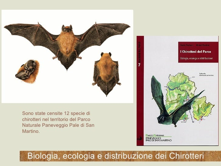 Biologia, ecologia e distribuzione dei Chirotteri Sono state censite 12 specie di chirotteri nel territorio del Parco Natu...