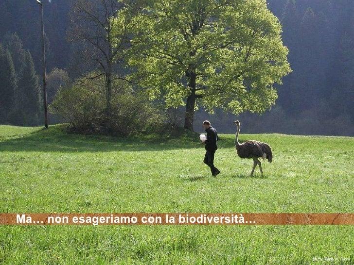 Ma… non esageriamo con la biodiversità…
