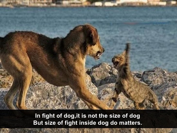 In fight of dog,it is not the size of dog  But size of fight inside dog do matters.