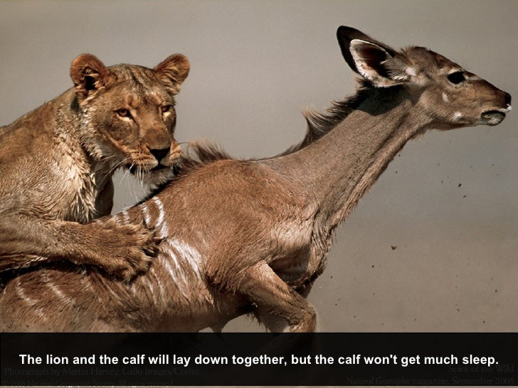 The lion and the calf will lay down together, but the calf won't get much sleep.