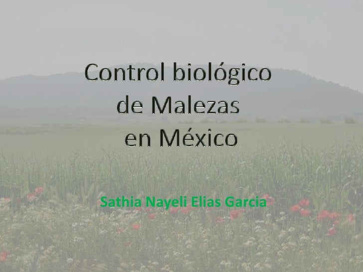 Control biológico <br />de Malezas <br />en México<br />SathiaNayeliEliasGarcia<br />